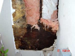Shown is an exterior wall with the water damage exposed.